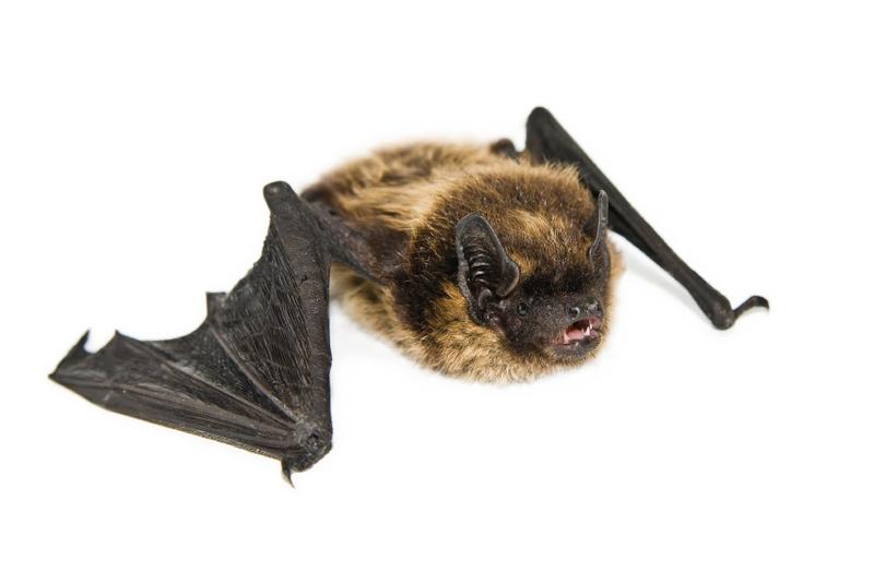 3143998272 bat removal service