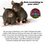 Rat removal, trapping and control