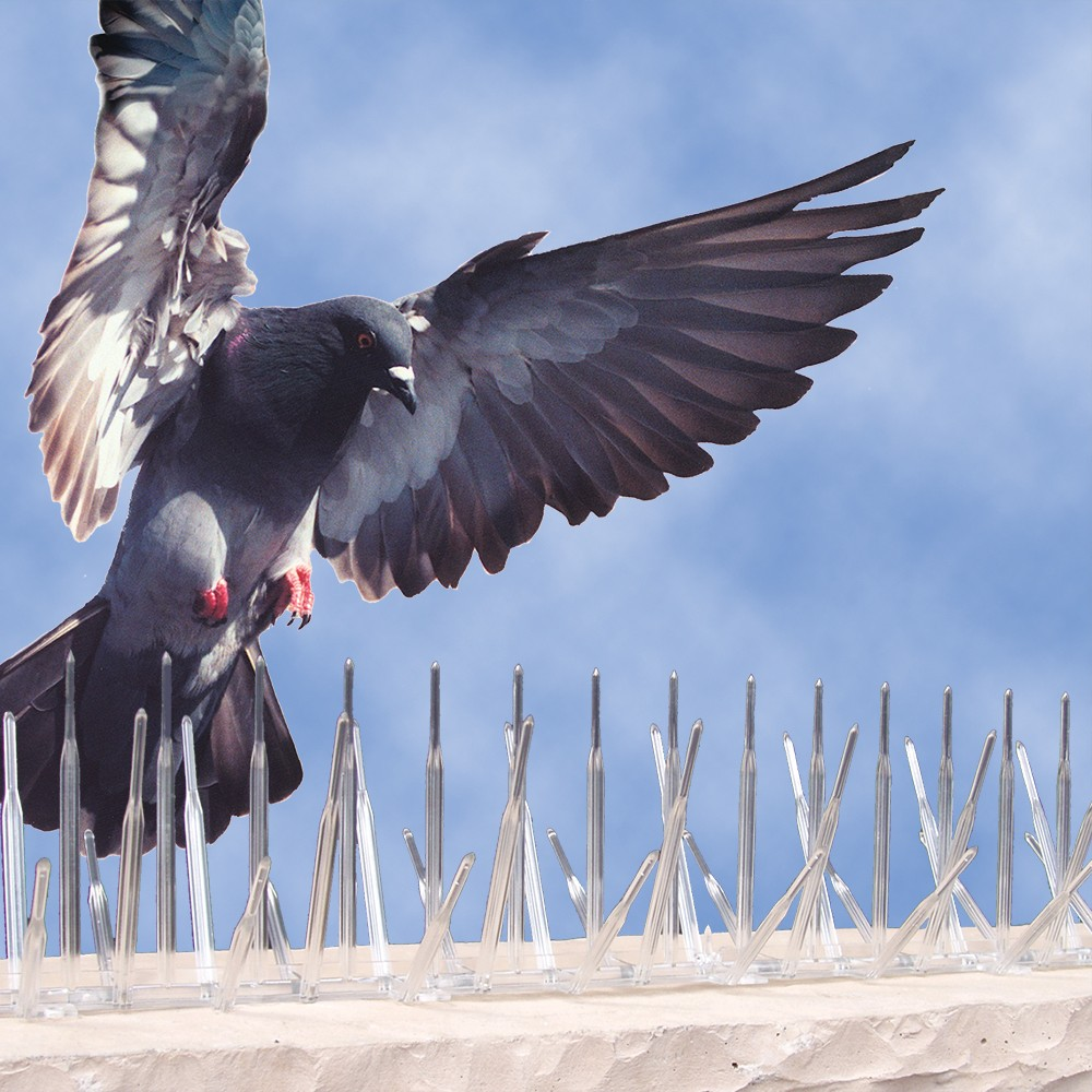 How to get rid of pigeons 78