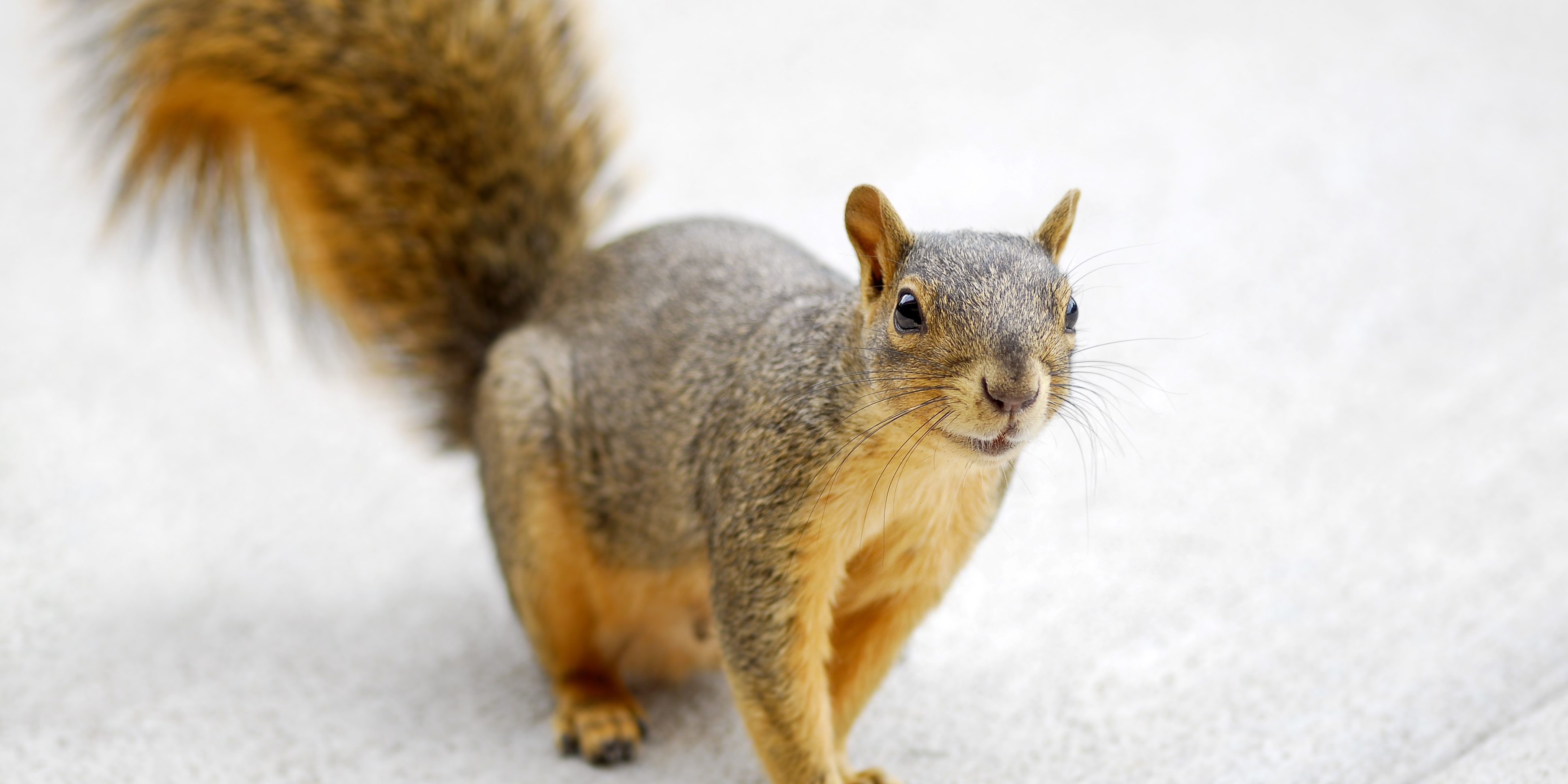 Best Squirrel Removal Company