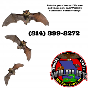 How to get bats out