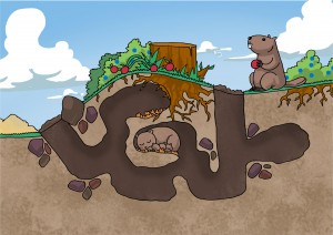 Groundhog Woodchuck den site and burrow layout