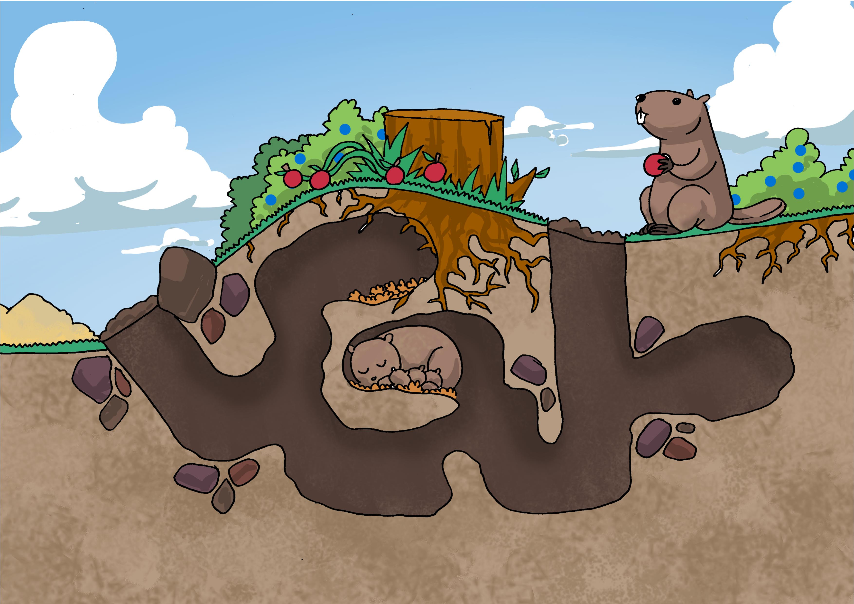 Image Gallery Groundhog Tunnels