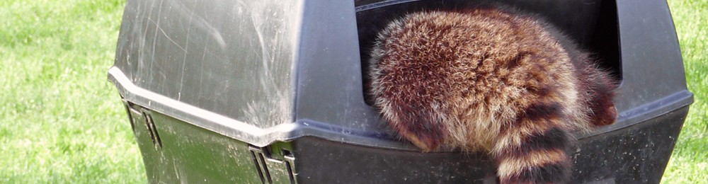 Wildlife Pest Removal St Louis Mo