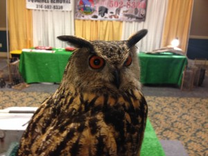 Wildlife Command Center Owl