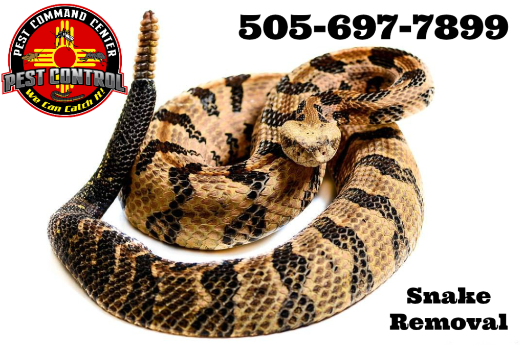 ABQ Snake Removal Wrangling