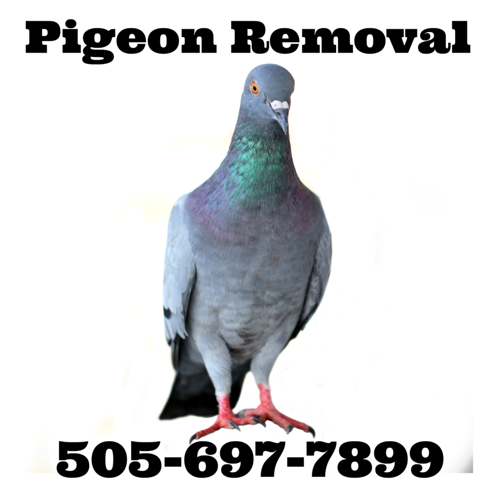 Master Pigeon Removal Falconer