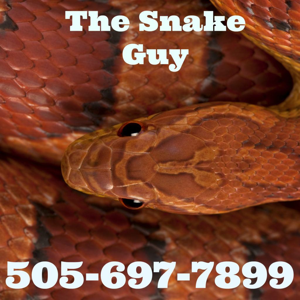 Albuquerque NM the snake guy