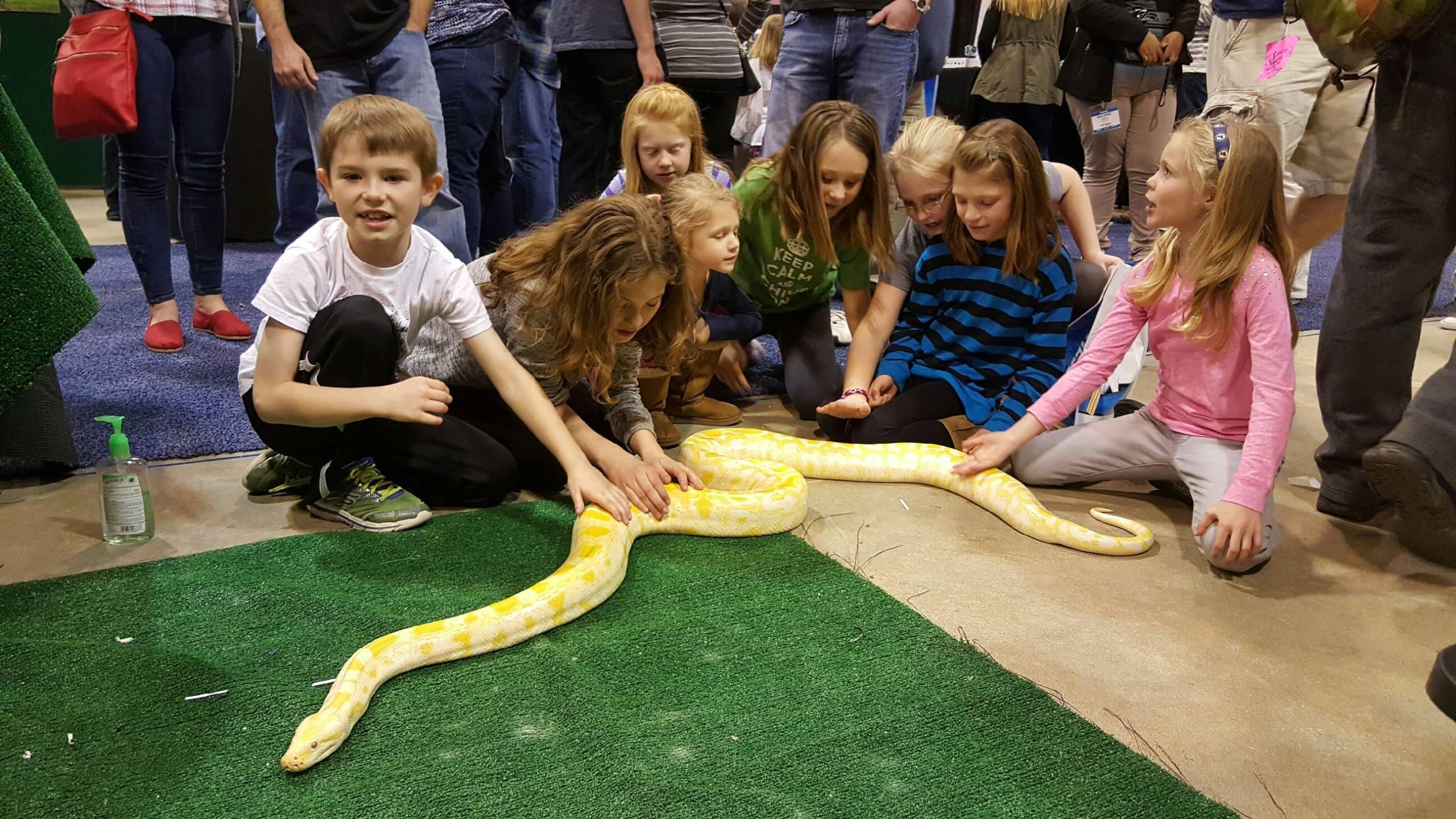 snakes for animal party
