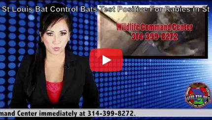 Youtube Video - St. Louis Bat Control & Rabies