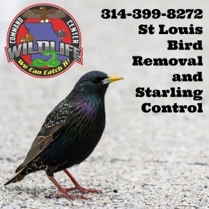 STL Bird Removal