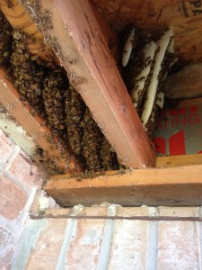 honey bee hive2