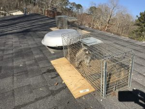 Wildlife Removal Little Rock